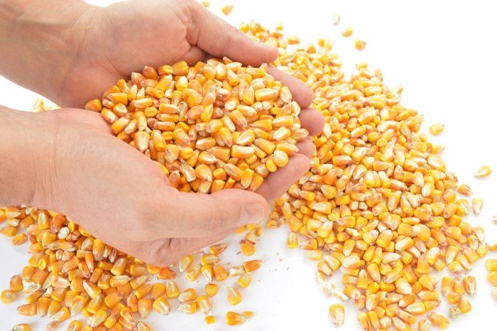 Le ricette di Così: zuppa di mais